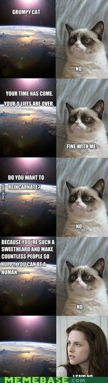 Grumpy Cat's 9 Lives Are Over