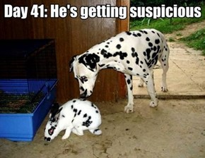 Hey, you're not a dalmatian!