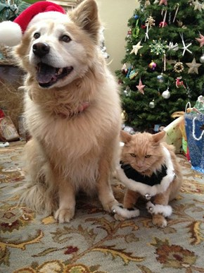 Kittehs R Owr Friends: Spreading Holiday Cheer!