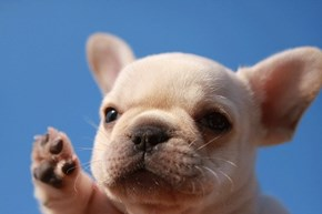 Cyoot Puppy ob teh Day: High Five