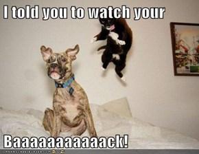 I told you to watch your  Baaaaaaaaaaack!