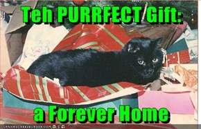 Teh PURRFECT Gift:  a Forever Home