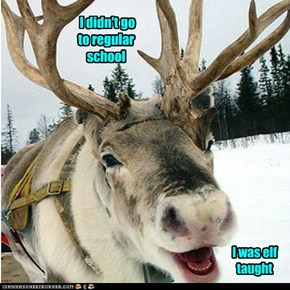 You're Quite Literate For A Reindeer