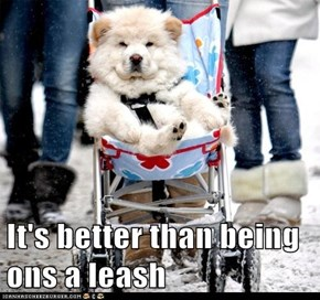 It's better than being ons a leash