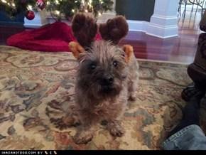Santa's other reindeer..