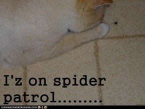 I'z on spider patrol.........