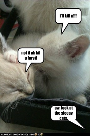CATFIGHT DISGUISED