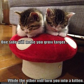 One side will make you grow larger... While the other will turn you into a kitten.