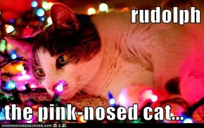 rudolph  the pink-nosed cat...