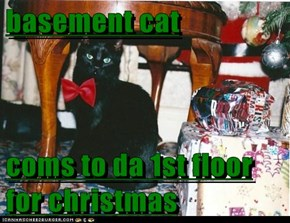 basement cat  coms to da 1st floor for christmas