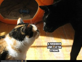 A FORBIDDEN LOVE......IZ TOO STRONG.