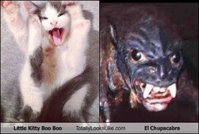 Little Kitty Boo Boo Totally Looks Like El Chupacabra