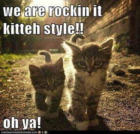 we are rockin it kitteh style!!  oh ya!