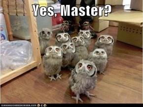 Yes, Master?