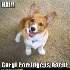 HAI!!  Corgi Porridge is back!