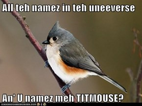 All teh namez in teh uneeverse  An' U namez meh TITMOUSE?