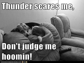 Thunder scares me,  Don't judge me hoomin!