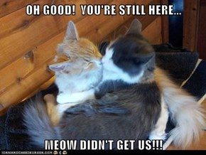 OH GOOD!  YOU'RE STILL HERE...  MEOW DIDN'T GET US!!!