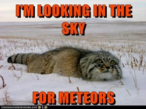 I'M LOOKING IN THE SKY  FOR METEORS