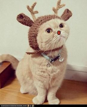 I can haz flying reindeer?