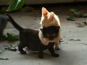 Cyoot Kittehs of teh Day: I'm Just So Drawn to Your Dark Soul...