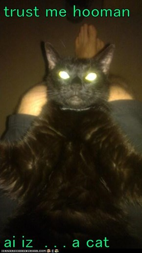 trust me hooman  ai iz  . . . a cat