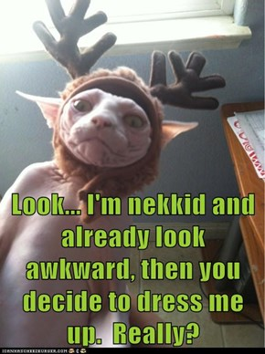 Look... I'm nekkid and already look awkward, then you decide to dress me up.  Really?