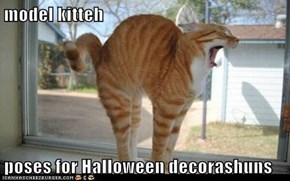 model kitteh  poses for Halloween decorashuns