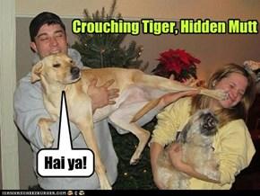 Crouching Tiger, Hidden Mutt