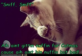 """""""Sniff, Sniff""""  Aih aint gittin nuffin fur Catmas cause aih aint bin nuffin but bad!"""