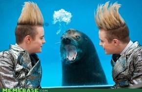Homophobic Seal IRL