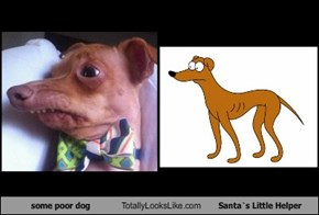 Some Poor Dog Totally Looks Like Santa`s Little Helper