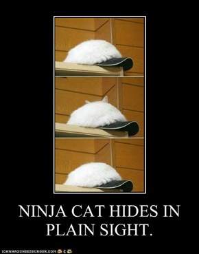 NINJA CAT HIDES IN PLAIN SIGHT.