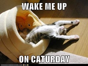 WAKE ME UP   ON CATURDAY