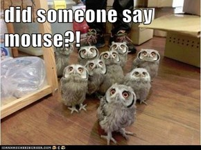 did someone say mouse?!