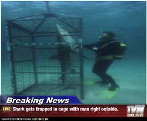 Breaking News - Shark gets trapped in cage with man right outside.