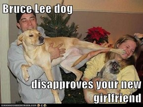 Bruce Lee dog  disapproves your new girlfriend