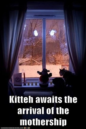 Kitteh awaits the arrival of the mothership