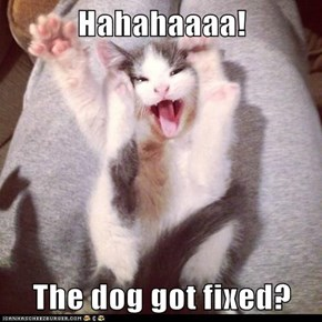 Hahahaaaa!  The dog got fixed?