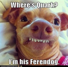 Where's Quark?  I'm his Ferendog.