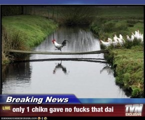 Breaking News - only 1 chikn gave no fucks that dai