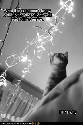 What this cat doesn't know is that biting these lights will lead to his demise.
