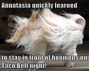 Annatasia quickly learned  to stay in front of hoomons on Taco Bell night!