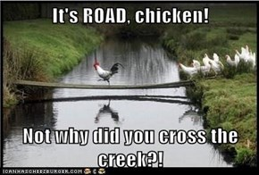 It's ROAD, chicken!  Not why did you cross the creek?!
