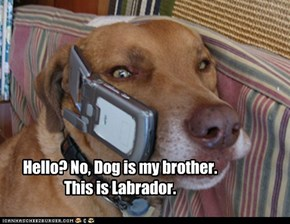 Hello? No, Dog is my brother. This is Labrador.