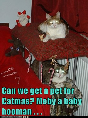Can we get a pet for Catmas? Meby a baby hooman . . .
