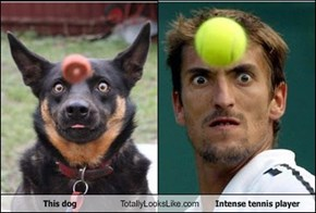 This Dog Totally Looks Like Intense Tennis Player