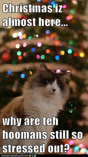 Christmas iz almost here...  why are teh hoomans still so stressed out?
