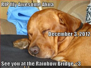 RIP My Awesome Akua December 3, 2012 See you at the Rainbow Bridge <3