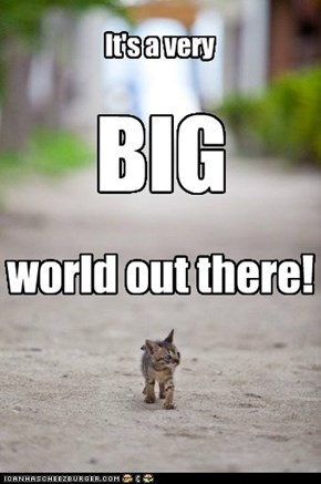 I'm just a small kitteh in a BIG world!